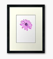 Single Pink African Daisy Against Green Foliage Isolated Framed Print