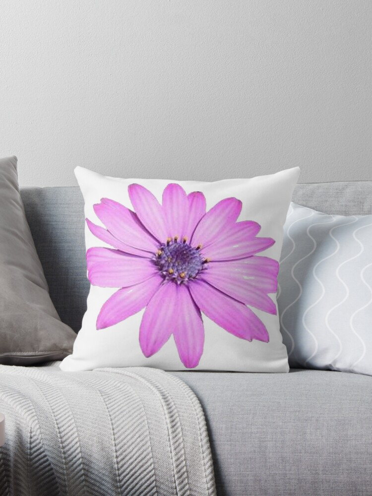 Single Pink African Daisy Against Green Foliage Isolated by taiche