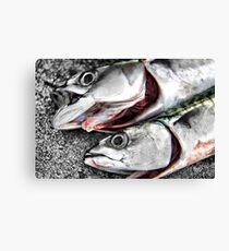 Freshly Caught Mackerel  Canvas Print
