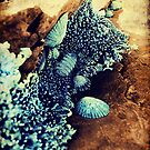 Beach rock shells by mark thompson