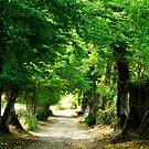 Tree Lane by Fleur Hallam