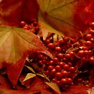 Color of the Season by Barbara  Brown