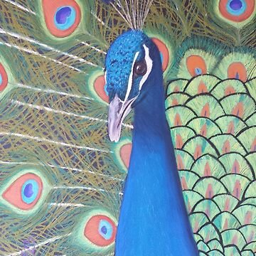 Peacock by YasminChambers