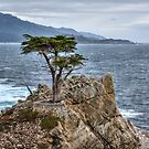 A Cypress Tree by Diego Re