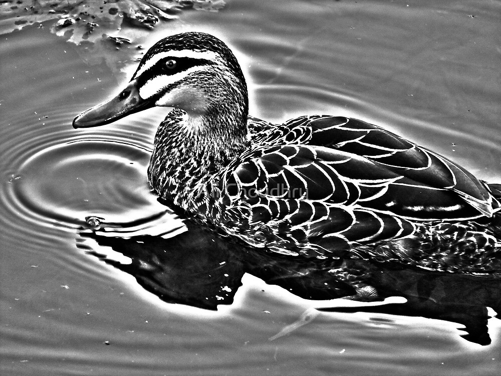 Duck in High Dynamic by AHakir