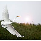 Great Egret by tomcelroy