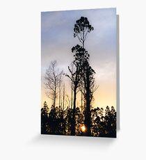 102 Mt St Leonards Greeting Card