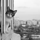 kitty on the balcony by wildrain