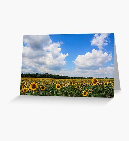 Sunflower Fields Forever Greeting Card