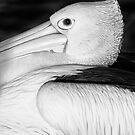 Big Bird by iltby