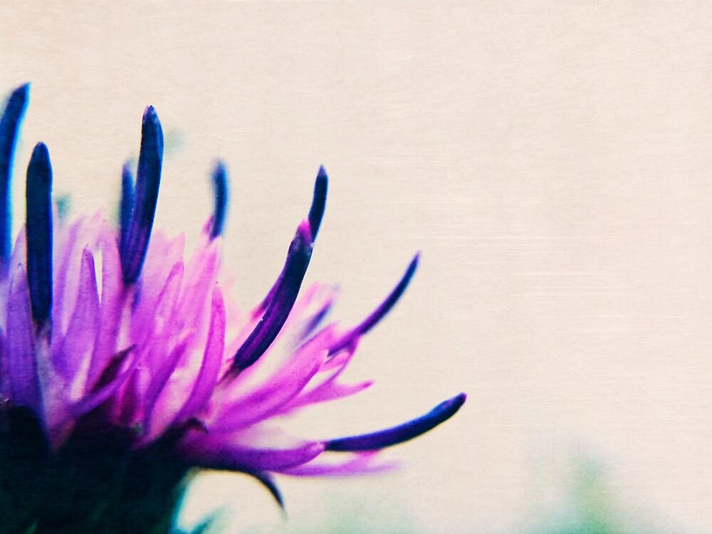 Purple thistle flower by Vicki Field