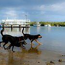 It's a dogs life by jesskato