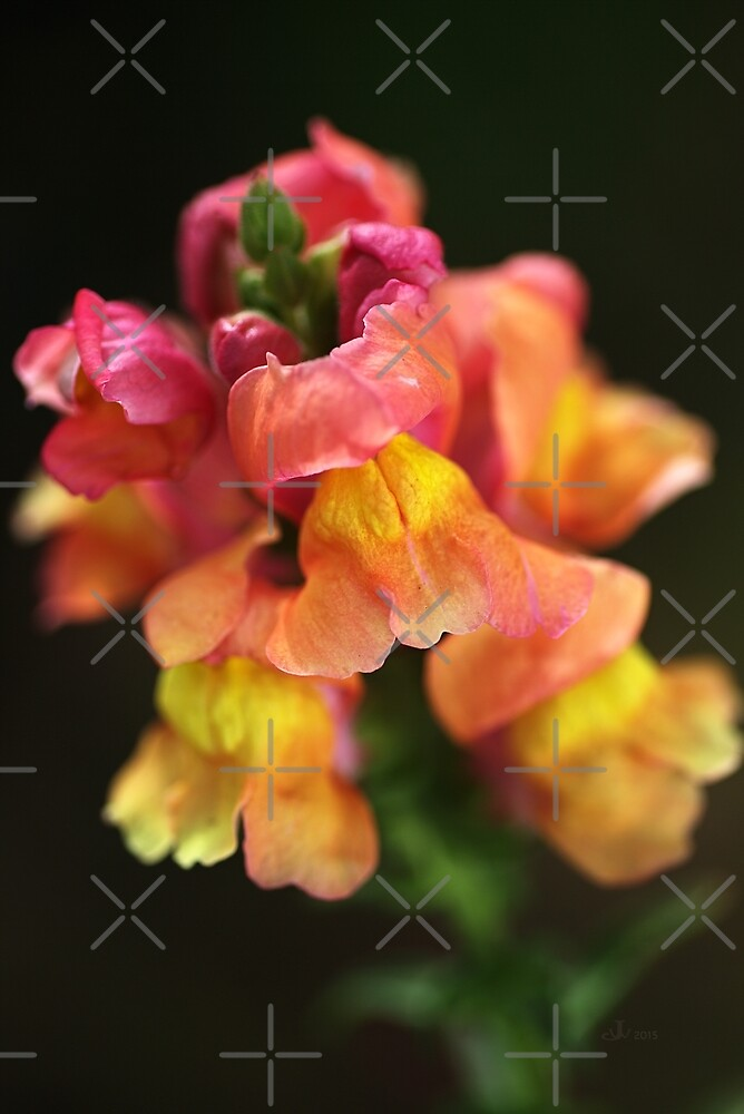 Snapdragon Flowers A Childhood Memory  by Joy Watson