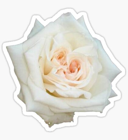 Close Up View Of A Beautiful White Rose Isolated Sticker