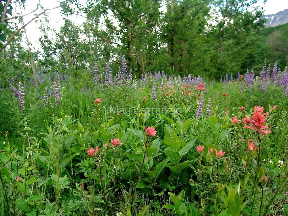 Lupines, Indian Paintbrush and Aspens by May Lattanzio