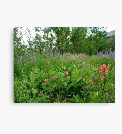 Lupines, Indian Paintbrush and Aspens Canvas Print