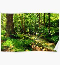 Hawksworth Woods Poster