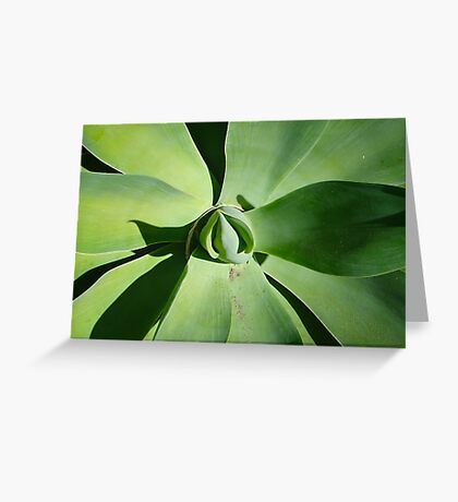 Budding flower Greeting Card