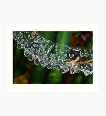 Web Water Bridge Art Print