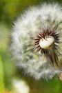 Make a Wish... by KBritt