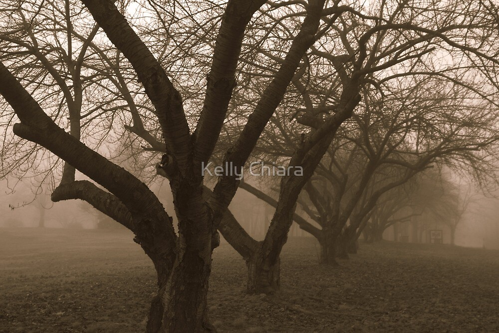 Echoes in the Fog by Kelly Chiara