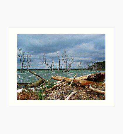 Driftwood Shores Art Print