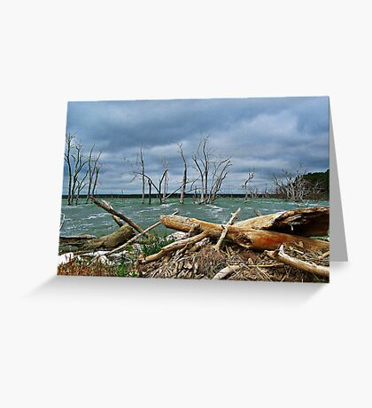 Driftwood Shores Greeting Card