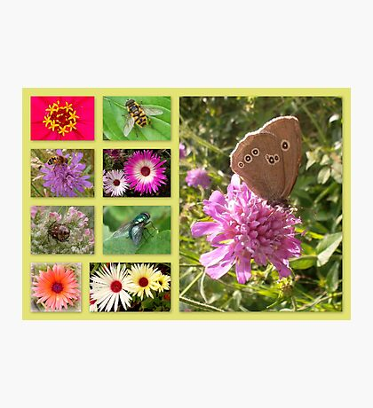 Flora and fauna in Bavaria Photographic Print