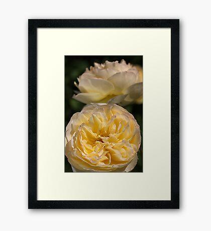 Shapes of the Rose Framed Print