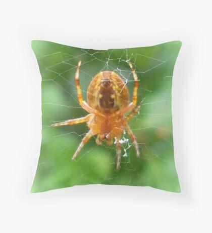 Baby Cross Spider (Araneus) Throw Pillow