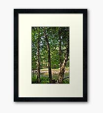 Yellow Birch by the river Framed Print