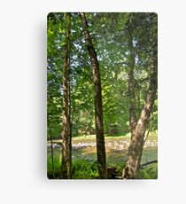 Yellow Birch by the river Metal Print
