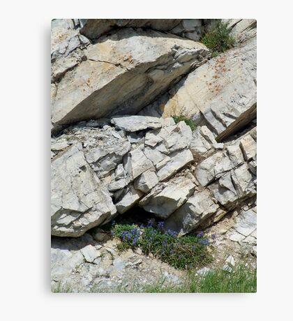 BLUE BOUQUET ON THE ROCKS - ROADSIDE GLACIER NATIONAL PARK Canvas Print