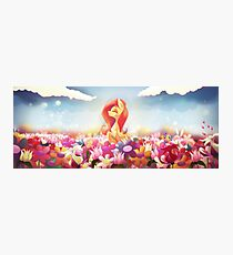 Fluttershy - On a Field Photographic Print