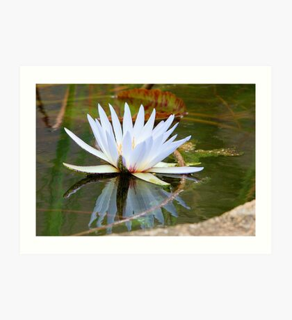 WATER LILLY REFLECTION Art Print