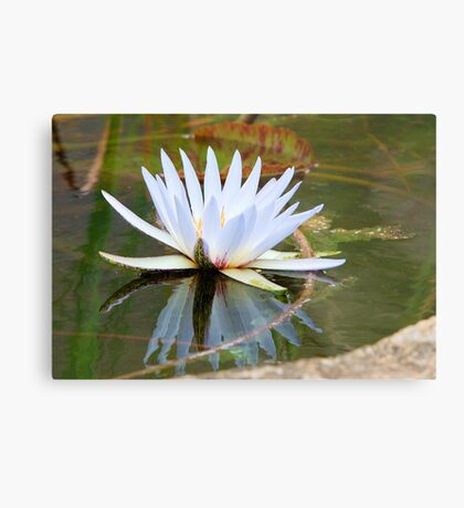 WATER LILLY REFLECTION Metal Print