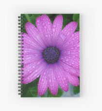 Purple African Daisy with Raindrops Spiral Notebook