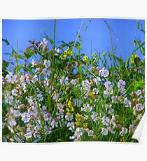 Summer Hedgerows Poster