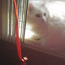 white cat with pink reflection by Nora Fraser