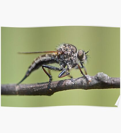 Cute and Fluffy Robber Fly Poster