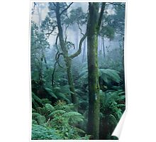 Winter morning on Mount Dandenong Poster