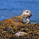 Seal and pup by David Alexander Elder