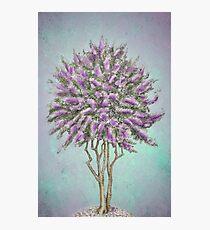 Crepe Myrtle Lavender Photographic Print