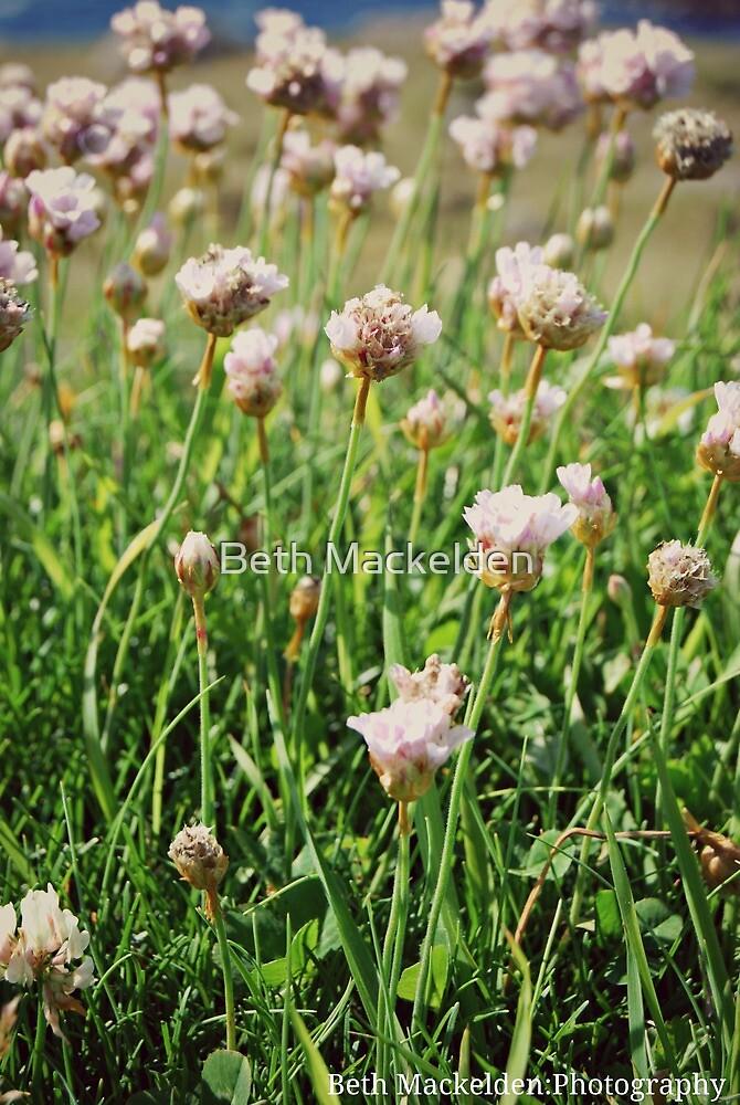 Flowers at Lands End by Beth Mackelden