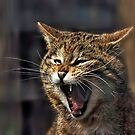 Scottish Wildcat by David Alexander Elder