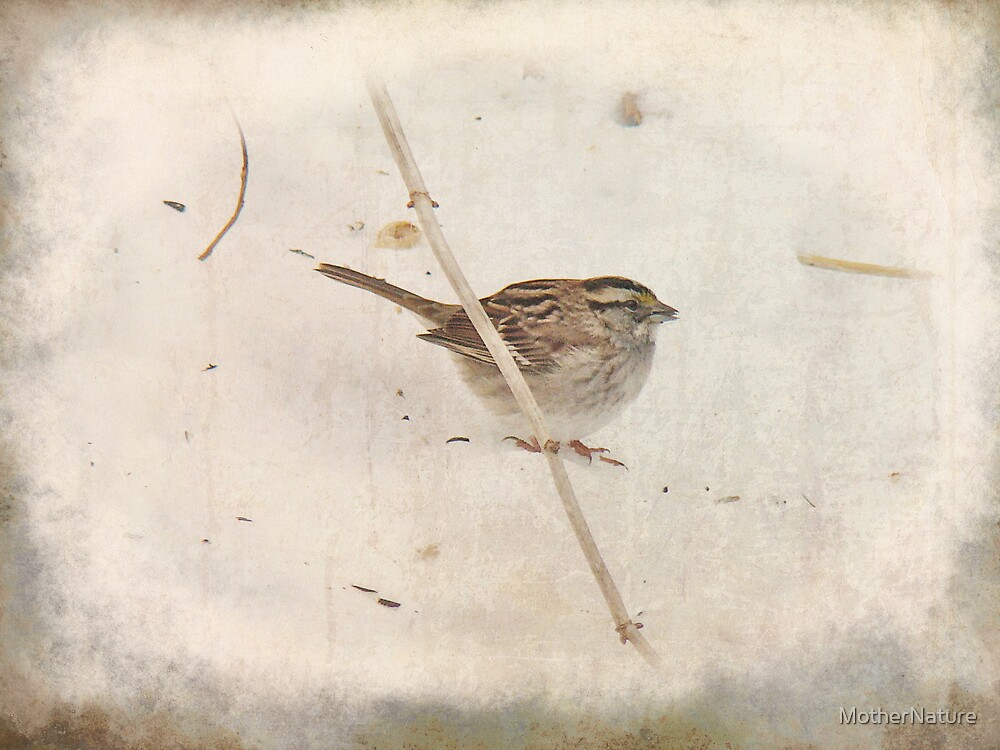 Winter and the Sparrow #3 by MotherNature