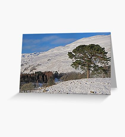 Scots Pine in the Snow Greeting Card