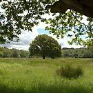 Oak in the meadow by CliveOnBeara