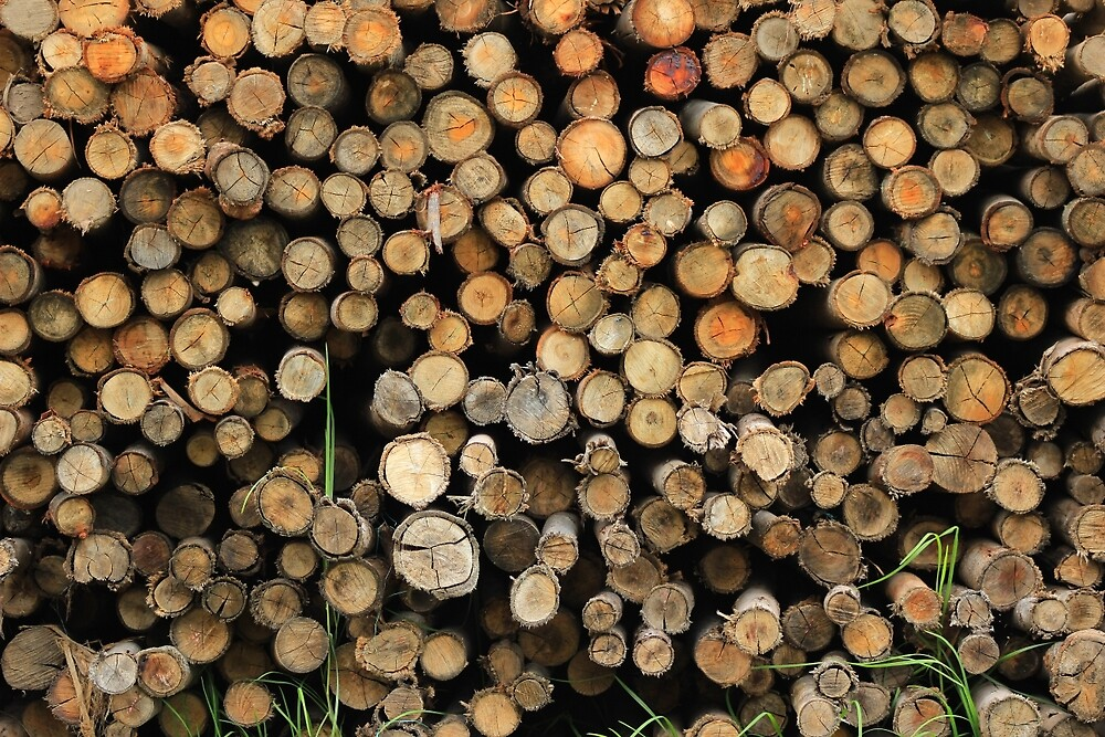 Wood Pile by rhamm