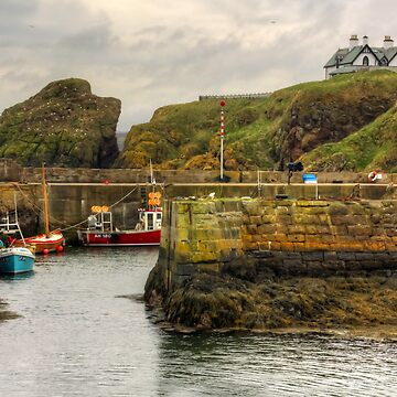 The Harbour at St Abbs by tomg